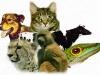 20051205163131-declaracion-universal-de-derechos-de-los-animales